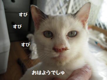 c0139488_16542736.jpg