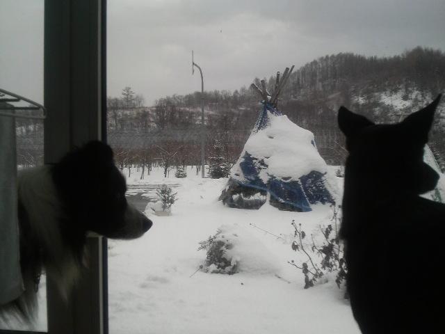 雪の休日_f0090009_11384823.jpg