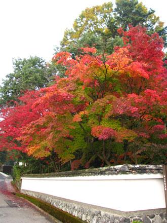 紅葉を訪ねて 西方寺_e0048413_21551457.jpg