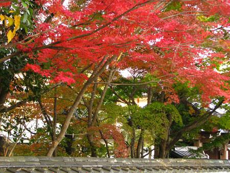 紅葉を訪ねて 西方寺_e0048413_21561590.jpg