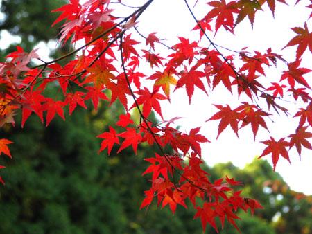 紅葉を訪ねて 西方寺_e0048413_21563141.jpg