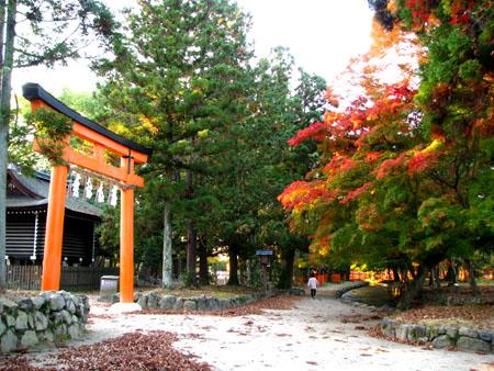 紅葉盛り 上賀茂神社2_e0048413_23172066.jpg