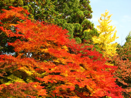 紅葉盛り 上賀茂神社2_e0048413_23182184.jpg