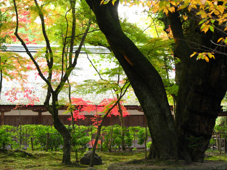 紅葉盛り 上賀茂神社2_e0048413_23184218.jpg