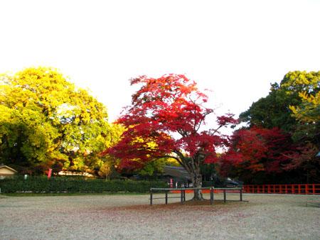 紅葉盛り 上賀茂神社1_e0048413_2383882.jpg