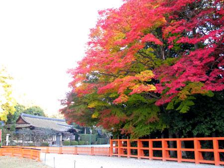 紅葉盛り 上賀茂神社1_e0048413_239897.jpg