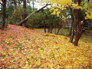 嵐の後の清水園は・・・。_e0135219_13561143.jpg