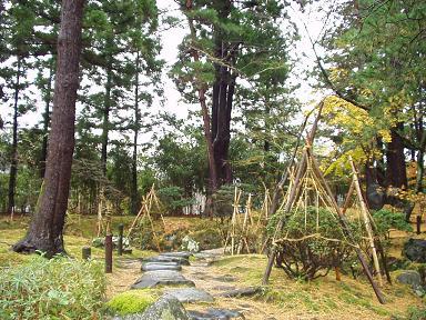 嵐の後の清水園は・・・。_e0135219_14339100.jpg