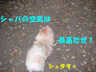c0179136_18494196.jpg