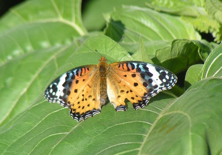 向日葵と蝶たち_c0065260_17401889.jpg