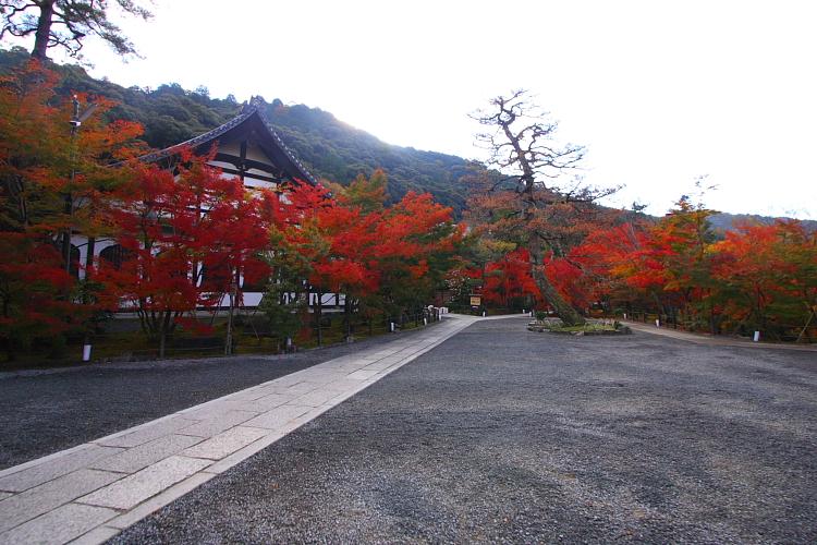 京都の紅葉名所めぐり_e0051888_3335857.jpg