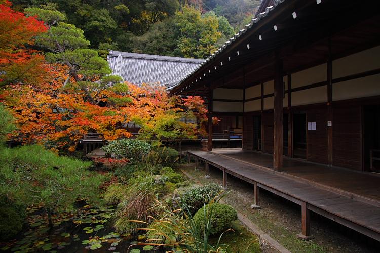 京都の紅葉名所めぐり_e0051888_3345278.jpg