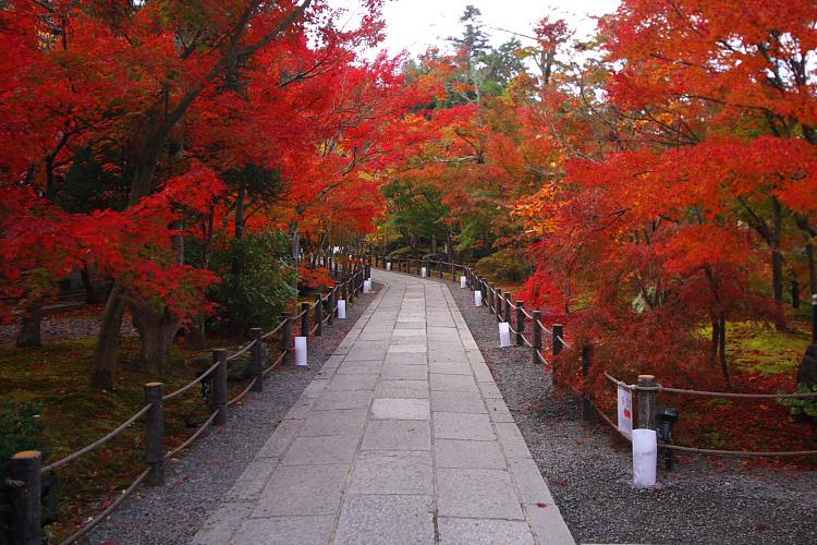 京都の紅葉名所めぐり_e0051888_3352427.jpg