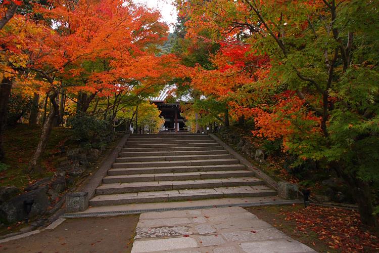 京都の紅葉名所めぐり_e0051888_3361445.jpg