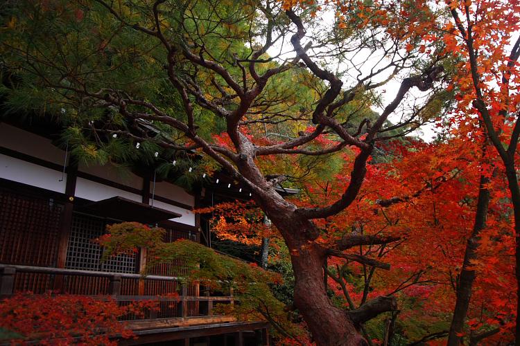 京都の紅葉名所めぐり_e0051888_3363177.jpg