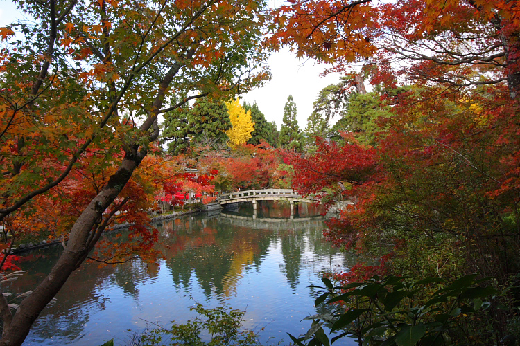 京都の紅葉名所めぐり_e0051888_3371466.jpg