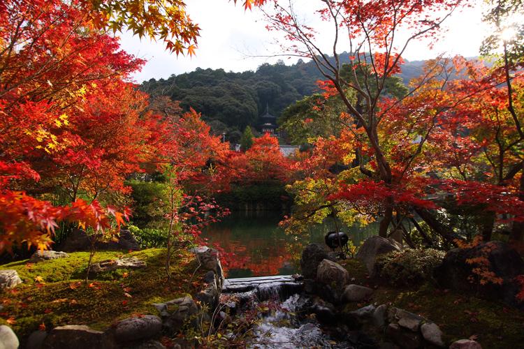京都の紅葉名所めぐり_e0051888_3382985.jpg