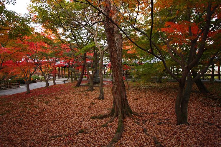 京都の紅葉名所めぐり_e0051888_3392951.jpg