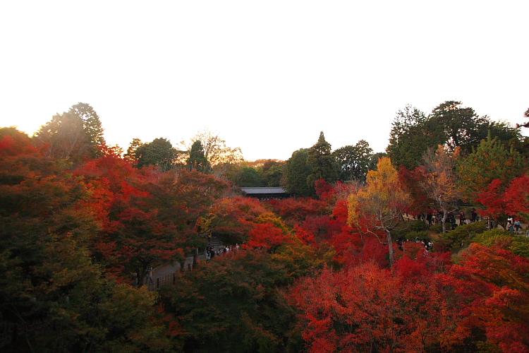 京都の紅葉名所めぐり_e0051888_3404932.jpg