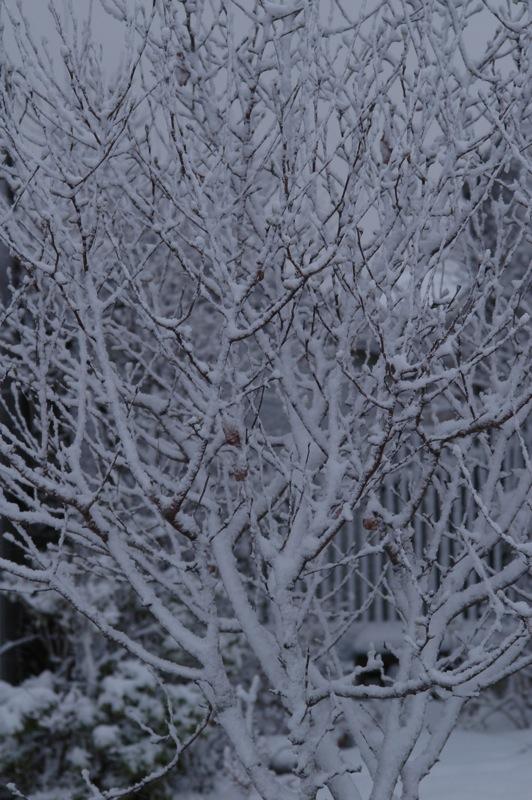 雪の朝_f0042194_18195526.jpg