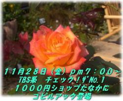 a0075802_1905016.jpg