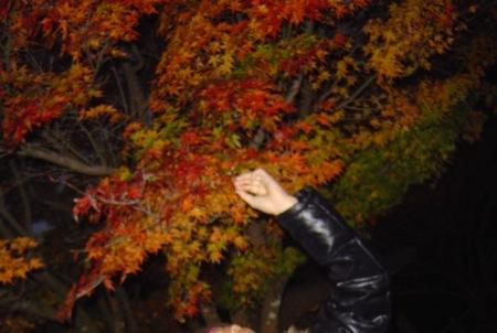 秋の菊池渓谷5鮮やかな紅葉_c0052304_12342813.jpg