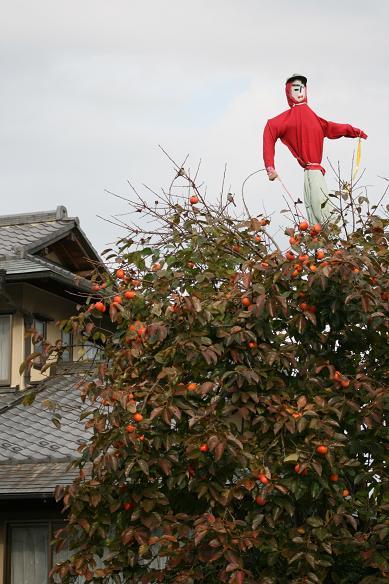 柿とツタの葉を見て、冬を迎える_d0150720_13343054.jpg