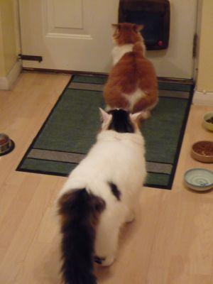 猫とけんかと日曜日_e0114020_7305161.jpg