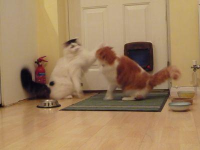 猫とけんかと日曜日_e0114020_73113100.jpg