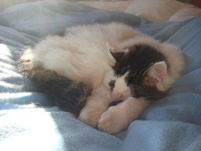 猫とけんかと日曜日_e0114020_805127.jpg