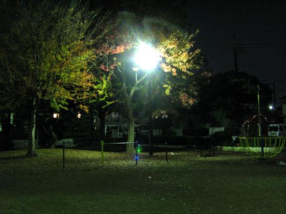 秋から冬へ・・・ 2008/11/19-wed_f0031535_22515116.jpg