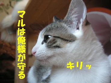 c0179136_6131155.jpg