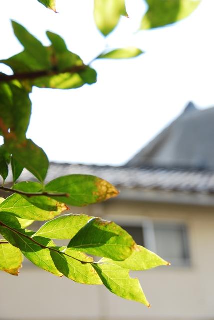 f0163464_20123149.jpg