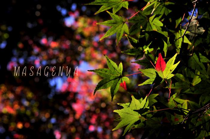f0184766_1153841.jpg
