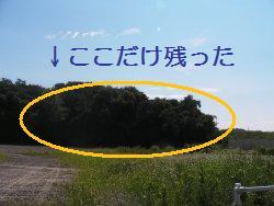 b0115777_091527.jpg