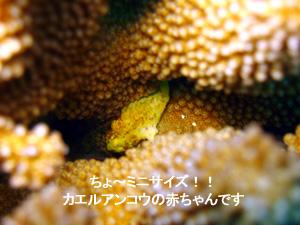 f0144385_155497.jpg