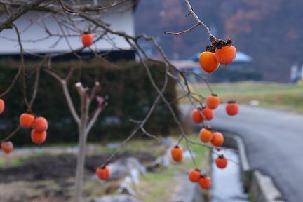 路地の初冬。_f0163491_175924.jpg