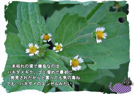 f0137096_1911438.jpg