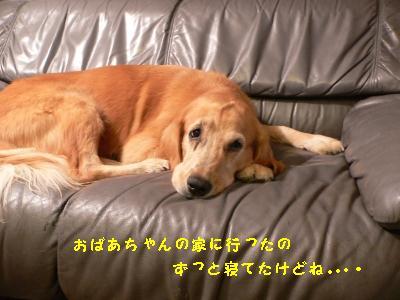 f0118135_21305715.jpg
