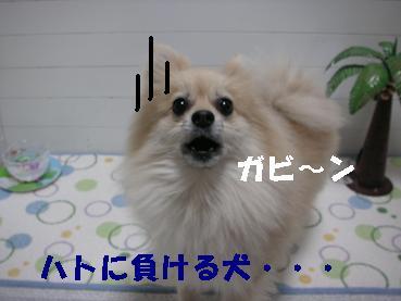 c0179136_1630591.jpg