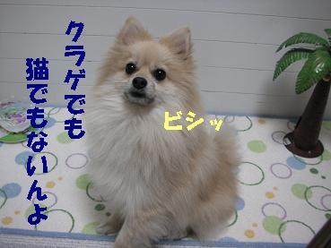c0179136_16593327.jpg