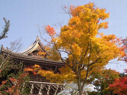 京都洛西でもみじ狩り_b0025947_1954464.jpg