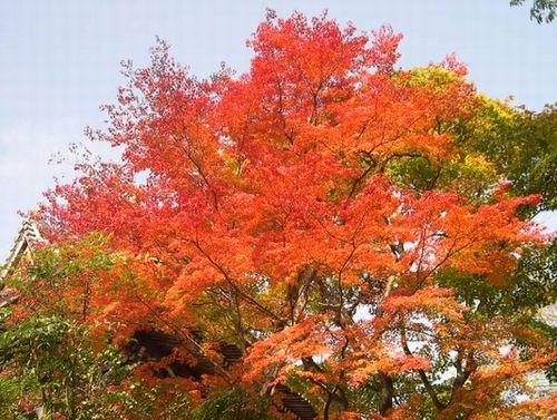 京都洛西でもみじ狩り_b0025947_19562542.jpg