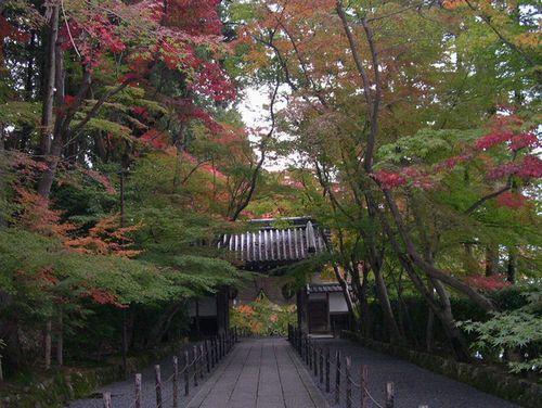 京都洛西でもみじ狩り_b0025947_22292858.jpg