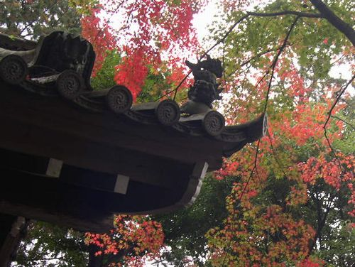 京都洛西でもみじ狩り_b0025947_2230260.jpg