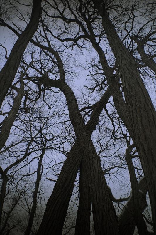 森の逍遥2_f0042194_0485528.jpg