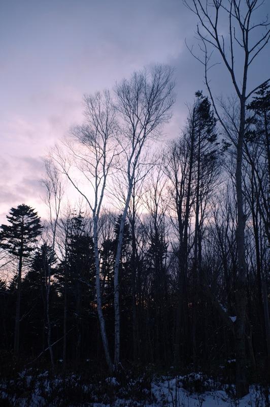 森の逍遥9_f0042194_7291128.jpg