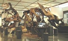 県大会のある御船は、恐竜の町_c0052304_22393662.jpg
