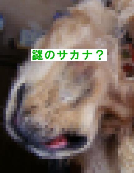 b0067012_14154182.jpg