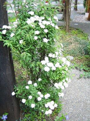 2008 LOG春の風景 1_c0038619_16355512.jpg